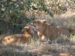 Lisa and cub